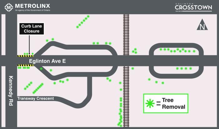 tree-grubbing-eglinton-crosstown